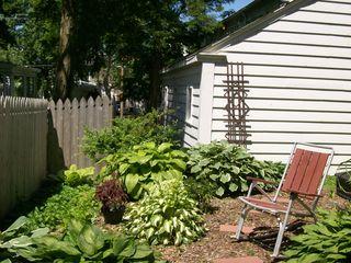10. Sunny 613 hosta Garden 2008 002